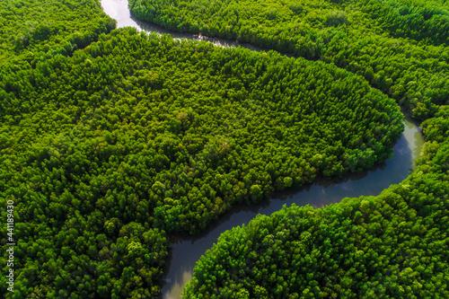Obraz na plátně Aerial view green mangrove tree forest sea gulf eco environment system