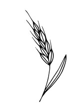 Simple Hand-drawn Vector Drawing In Black Outline. Wheat Spikelet Isolated On White Background. Cereals, Growing Farm Crops. For Print, Logo, Label Of Flour Products. Baking, Baked Goods. Ink Sketch.