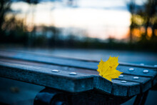 Empty Public Park Bench With A Lone Fallen Yellow Leaf At Sunset