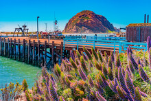 Morro Bay Harbor Sits In Front Of Morro Rock In California On A Sunny Day Next To Fishing Boats And Wharf.
