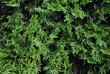 pflanze als hintergrund