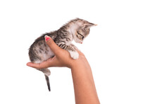 Small Kitten In Human Hand On White Background