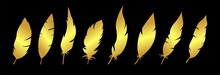Golden Feather Vector Collection