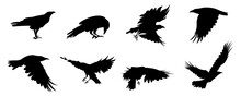Eagle Silhouette Vector Collection