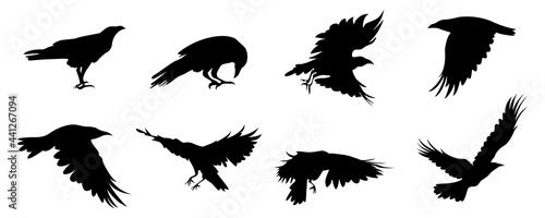 Fotografija eagle silhouette vector collection