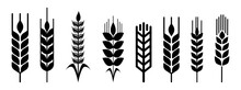 Wheat Vector Collection