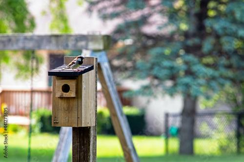 Foto Bird resting on birdhouse