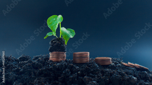 Fotografiet Seedlings with Savings and Growing Silver Coins for Financial Businesses Finance
