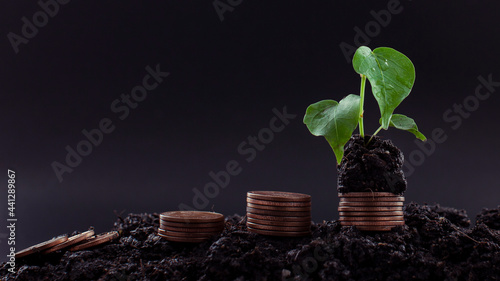 Canvastavla Seedlings with Savings and Growing Silver Coins for Financial Businesses Finance