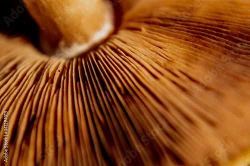 Fototapeta Parte inferior de un hongo silvestre