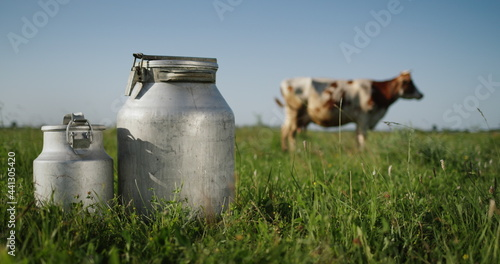 Murais de parede Milk bidons stand on pasture, a cow grazes in the background in the meadow