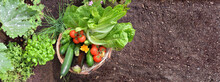 Basket Filled With Colorful Fresh Vegetables In The Garden