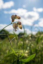 Plants On A Field