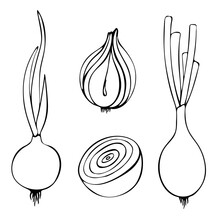 Contour Vector Illustration Of Onion With Leaves. Image Of Fresh Vegetables, Summer Season. Drawn By Hands. Isolated Over White Background.