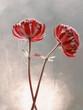 Kwiaty Astrantia- Jarzmianka