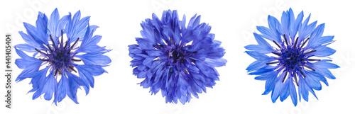 Fotografia Set with beautiful blue cornflowers on white background
