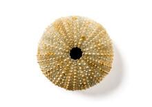 Sea Urchin Abstract Macro View