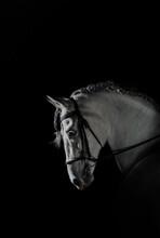 White Horse On Dark Background