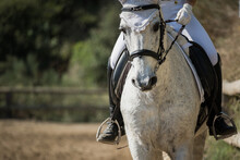Anonymous Female Equestrian Riding Horse In Paddock