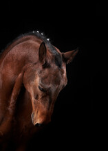 Brown Horse With Creative Mane On Black Background