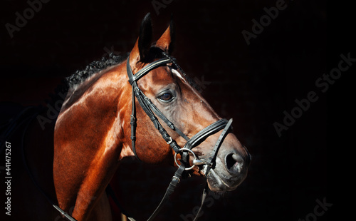 Fotografie, Obraz portrait of beautiful horse on stable background.  sunny morning
