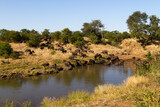 Kruger National Park: buffalo