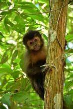 Mono En Un árbol Mirando A La Cámara