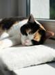 Kot śpiacy na parapecie, poduszka, słońce, zwierzę domowe, relaks,