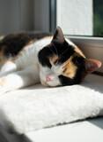 Fototapeta Zwierzęta - Kot śpiacy na parapecie, poduszka, słońce, zwierzę domowe, relaks,