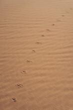 Animal Footprints In The Desert Sand