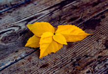 Yellow Leaves On A Wooden Table. Photocomposition In Autumn Colors. Natural Background.