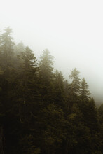 Green Forest On Hill In Fog