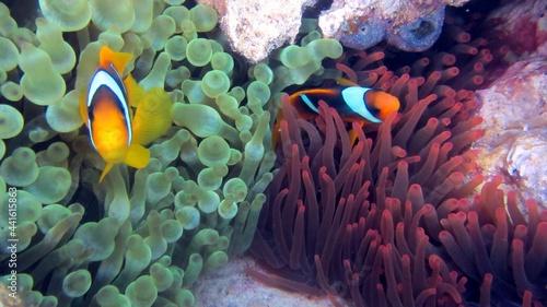 Fotografie, Obraz fish on coral