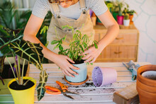 Florist Transplanting Potted Plants In Floristry Shop