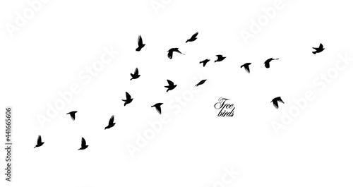 Fotografija A flock of flying birds. Vector illustration