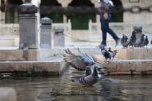 Pigeons On The Fountain