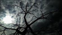 Spooky Tree At Night, Horror Tree, Tree Silhouette
