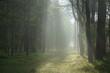 Leśna droga o poranku. Wscodzące slońce w lesie. Smugi światła