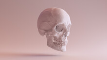 White Human Female Skull Medical Anatomical With Jaw Quarter Right Side 3d Illustration Render