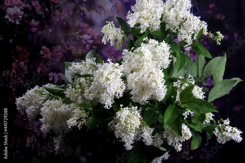 Murais de parede White Lilac Agnes Smith flowers - syringa prestoniae agnes smith in glas vase and dark purple flower background