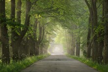 Pathway Through The Majestic Deciduous Forest On A Fog At Sunrise. Soft Sunlight, Sunbeams. Mighty Trees. Natural Tunnel. Pure Nature, Ecology. Ecotourism, Fantasy, Fairy Tale, Dream, Mystery Concepts