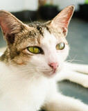 Fototapeta Zwierzęta - Biały kot, zbliżenie na pysk, piękne zwierzę domowe.