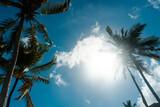 Tropikalny krajobraz, palmy kokosowe na tle nieba i słońca.