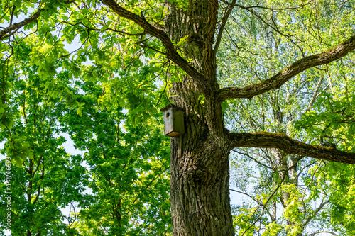 Low angle shot  of a birdhouse on a tree on a sunny day Fototapeta
