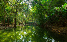 Pond In The Forest,Idyllic Sunlit Glade Green Forest Foliage Reflecting Woodland Pool Panorama