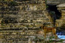 Male Shepherd Dog Looks Around While Sitting In Front Of Nice Landscape. Anatolian Shepherd Dog Mix.
