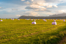Wrapped Hay Bales In A Green Field Warmly Lit By Setting Sun In Summer. Mountains Are Visible In Background. Southern Iceland.