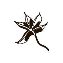 Isolated Element Spice Symbol Star Anise Black And White Vector