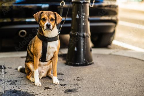 Portrait Of Dog Sitting On The Street Fotobehang