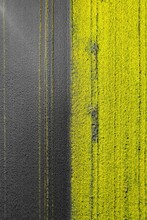Two Coloured Rapeseed Field